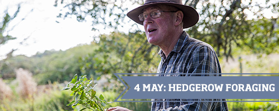 Hedgerow Foraging >