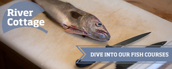 Dive into our fish courses >