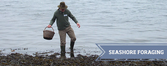Seashore Foraging >