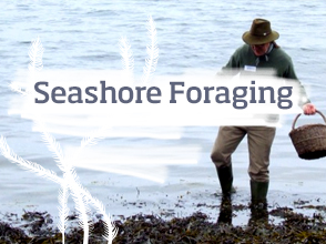 Seashore foraging course >