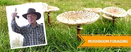 Mushroom Foraging >
