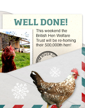 British Hen Welfare Trust >