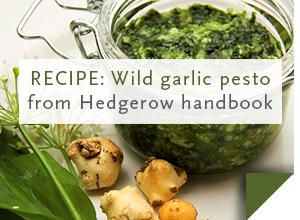 RECIPE: Wild garlic pesto >