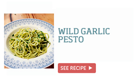 Wild garlic pesto >