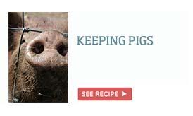 Keeping pigs >