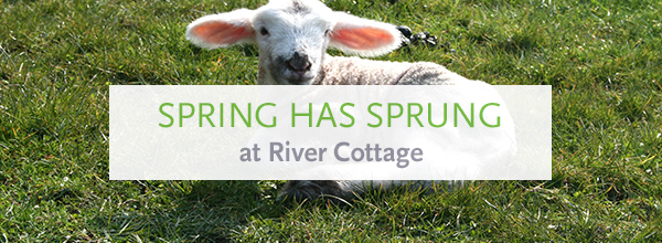 Spring has sprung at River Cottage >