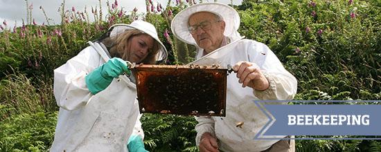 Beekeeping >